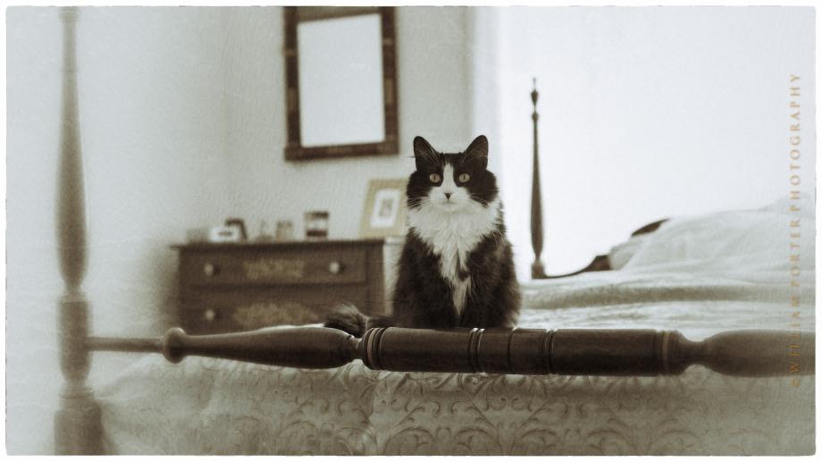 Kiki (Snapseed)