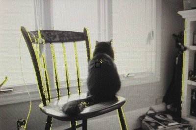 Cat sitting on chair by window.